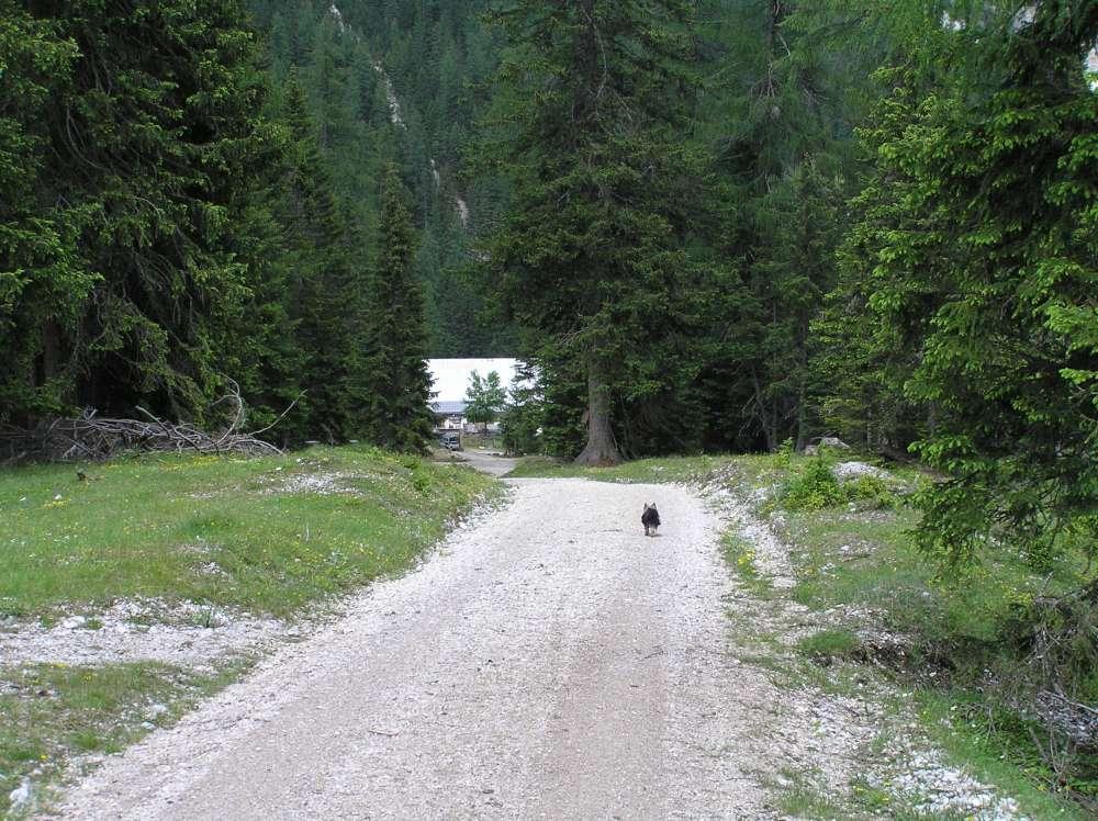 Forstweg von Scharnitz bis zur Kristenalm